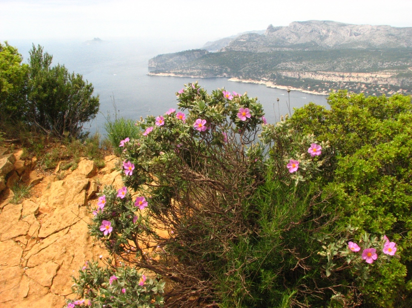 Cala de Marsella, el cuidado al medio ambiente